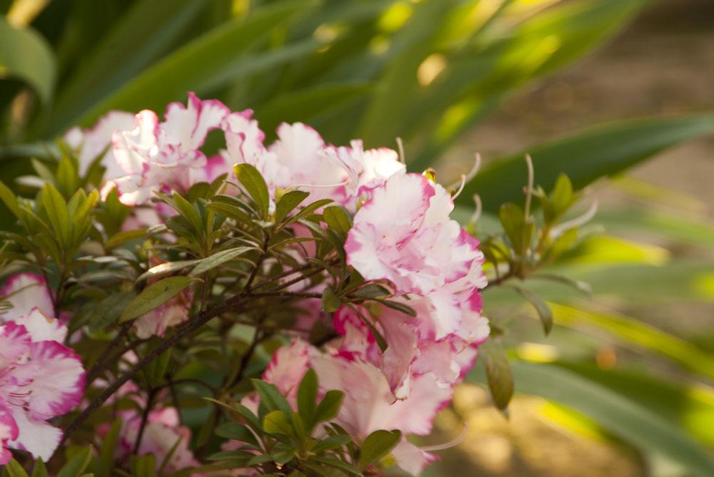 fiori colorati nel giardino
